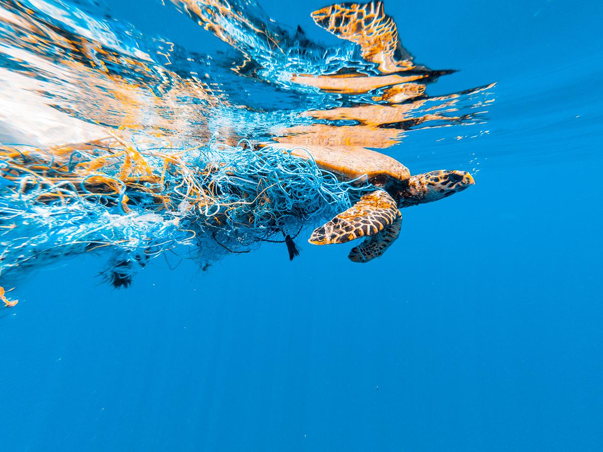 海中に廃棄された漁網をアップサイクルした素材で作られています。ウィルスの接触感染を避ける、小さくてスリムな非接触ツール。衛生的に持ち歩ける「プッシュスティック」|QUALY