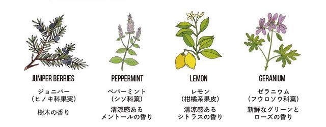 新しい始まり、リフレッシュをイメージした香り。爽やかなレモンやペパーミント、樹木を思わせるジュニパーを中心に、こちらも天然オイルをブレンドした全身シャンプー|『MANGETSU(満月)』『SHINGETSU(新月)』Jam Label(ジャムレーベル)