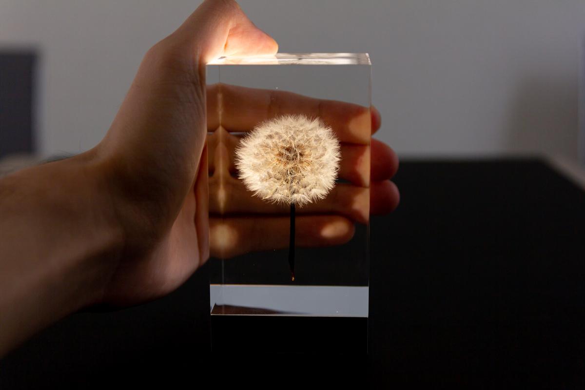 たんぽぽの美しさをいつまでも楽しむことができる有機ELを使ったアクリルオブジェ | OLED TAMPOPO LIGHT by TAKAO INOUE