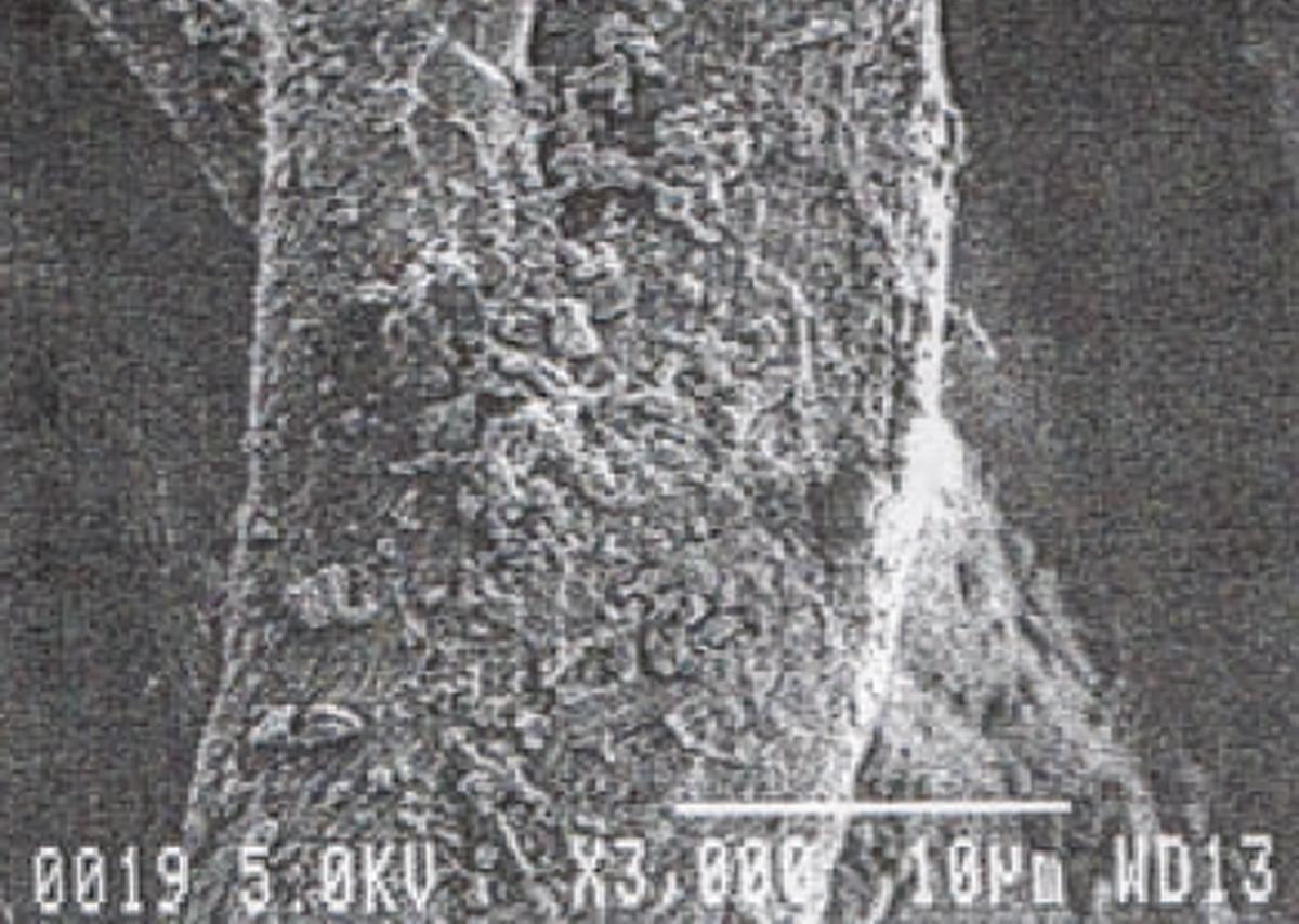 中わたの繊維1本1本に、まんべんなく、鉱物パウダーが吸着している様子。3000倍の電子顕微鏡写真より。一晩中着けてもラクな足首ウォーマー| IONDOCTOR(MONOCO限定カラー)
