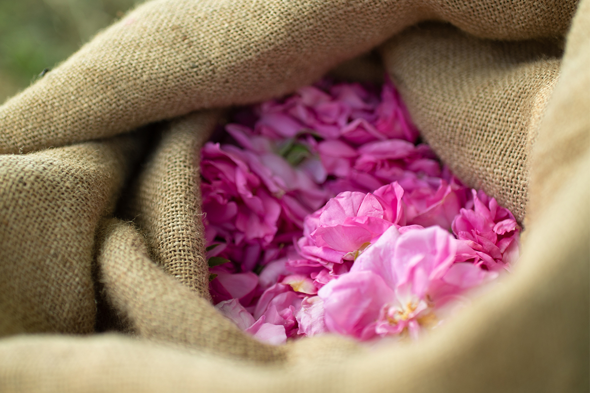 自然の香りを傷つけないよう、繊細なバランスで調香された『FARIBOLES』の香りは、深呼吸したくなるほど穏やかに漂います|南仏・グラース生まれのルームミストとキャンドル|FARIBOLES(ファリボレ)