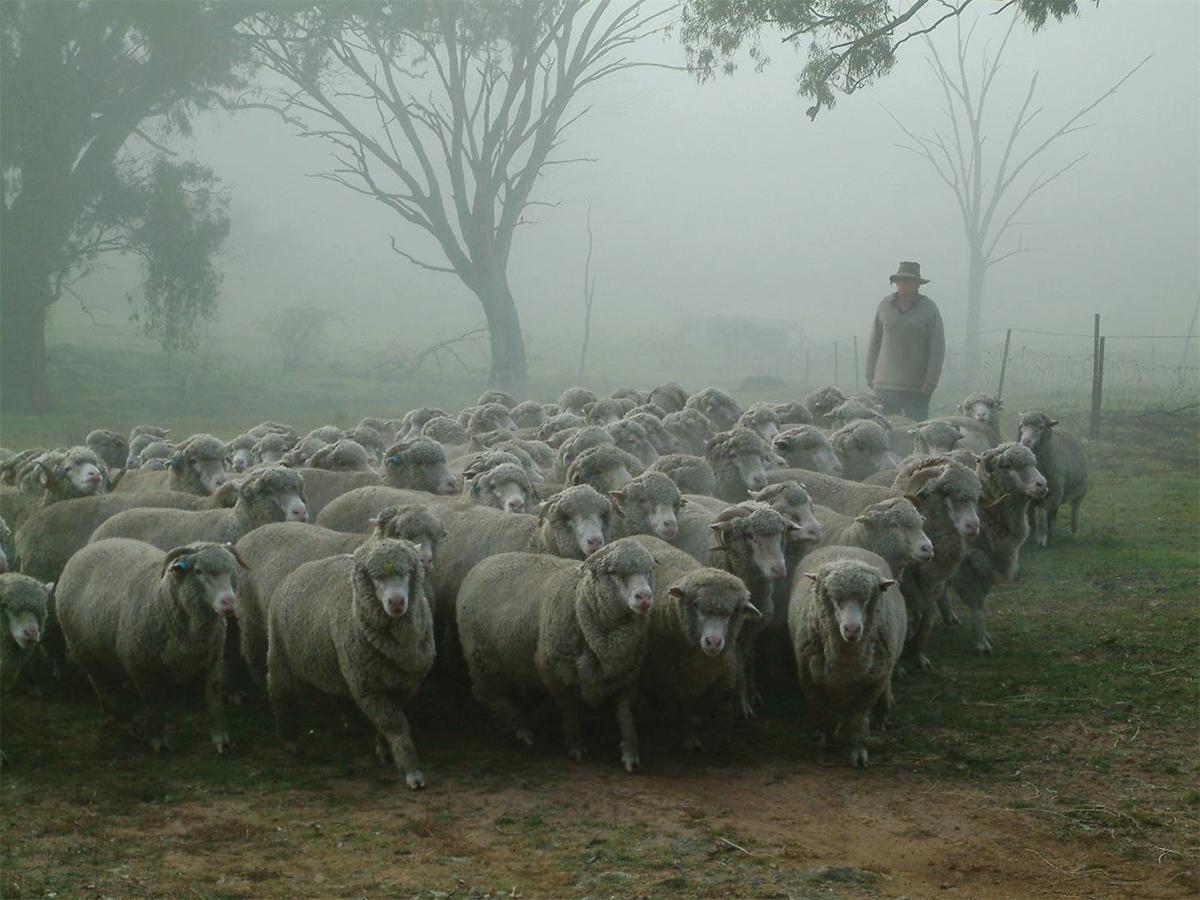 足を入れた瞬間、ホッとする自然な温もりと滑らかな肌触り。奇跡の羊を選別して生まれた特殊毛を使用。滑らかな特殊毛で足元ほかほか、蒸れずに指先サラサラな「メリノオプティモ ソックス」| Renfro