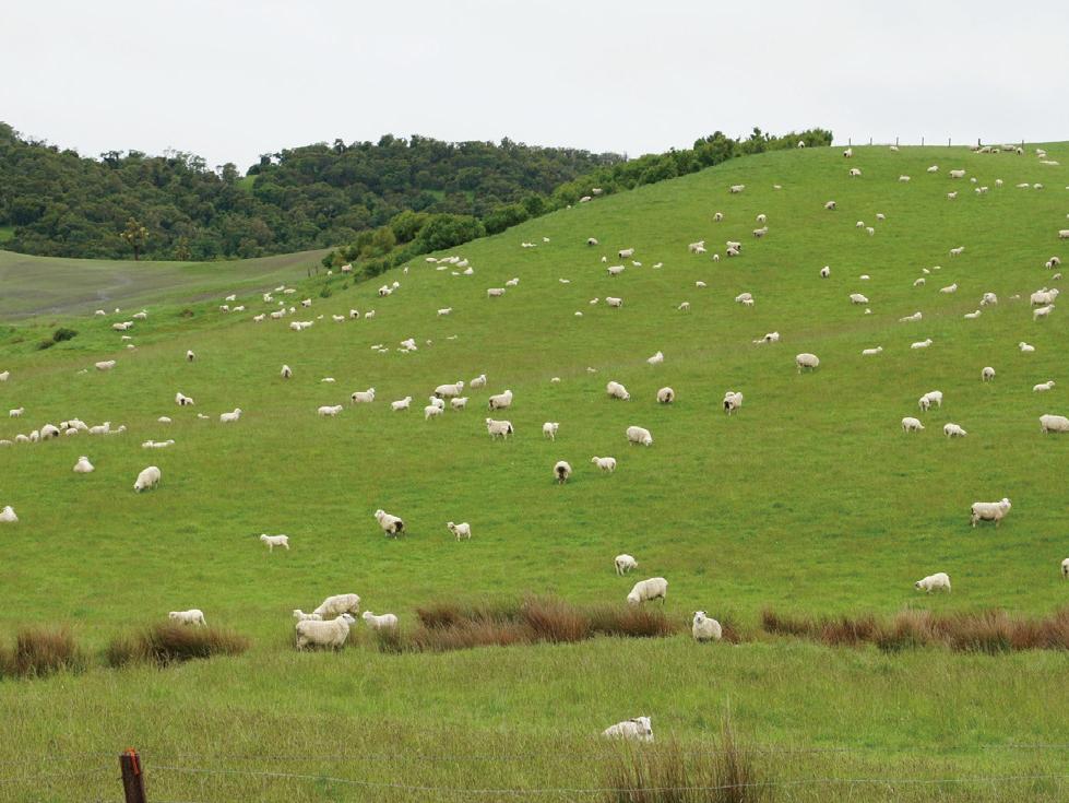 呼吸する繊維と呼ばれる奇跡の羊を選別して生まれた特殊毛を使用。滑らかな特殊毛で足元ほかほか、蒸れずに指先サラサラな「メリノオプティモ ソックス」| Renfro