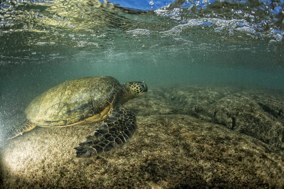 GALAPAGOS(ウミガメと泳げる世界遺産の島)がテーマのビーチサンダル|九十九サンダル