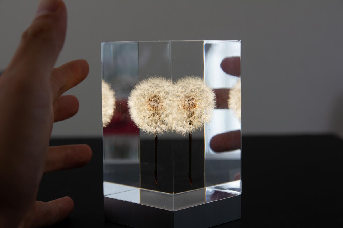 1.生花のたんぽぽを閉じ込めたゆらぎ照明・アクリルオブジェ | OLED TAMPOPO LIGHT by TAKAO INOUE
