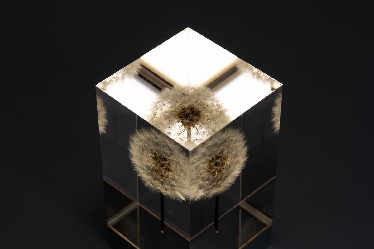 自然光に近い光の有機ELを使用した照明・アクリルオブジェ | OLED TAMPOPO LIGHT by TAKAO INOUE