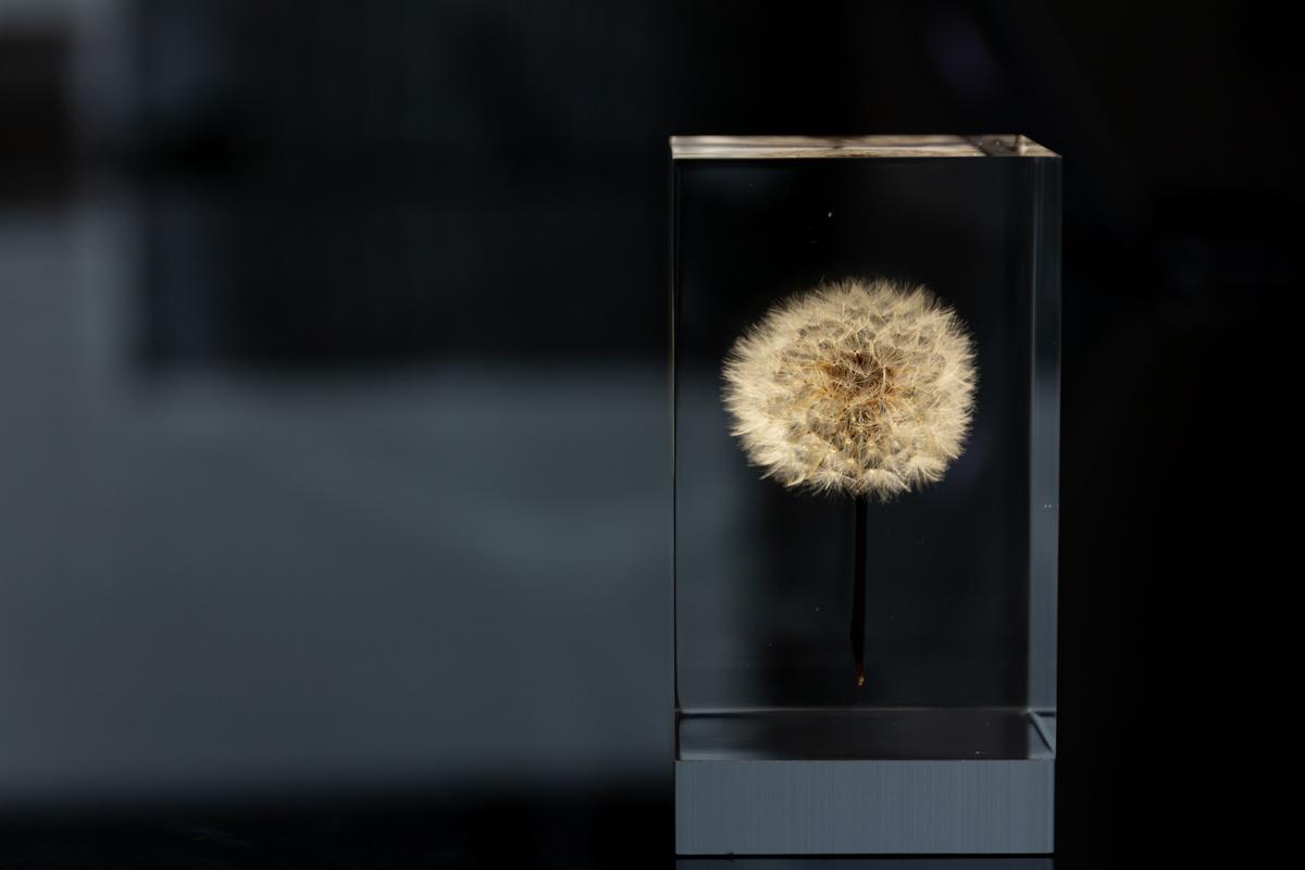 生花のたんぽぽをアクリルに閉じ込めたアクリルオブジェ | OLED TAMPOPO LIGHT by TAKAO INOUE
