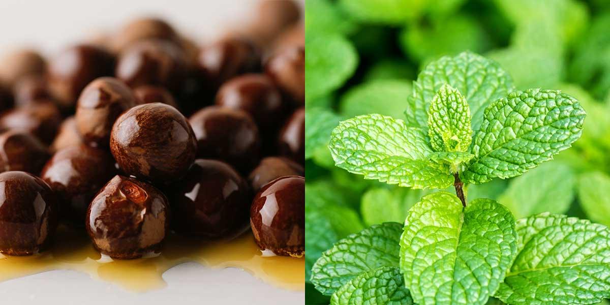 頭皮の匂いを抑える、オーガニックの茶の実オイル、オーガニックミントエキス|『uruotte(ウルオッテ)』のナチュラルシャンプー「ミント&シトラス」とハーバルエッセンス「爽」(薬用育毛料・医薬部外品)