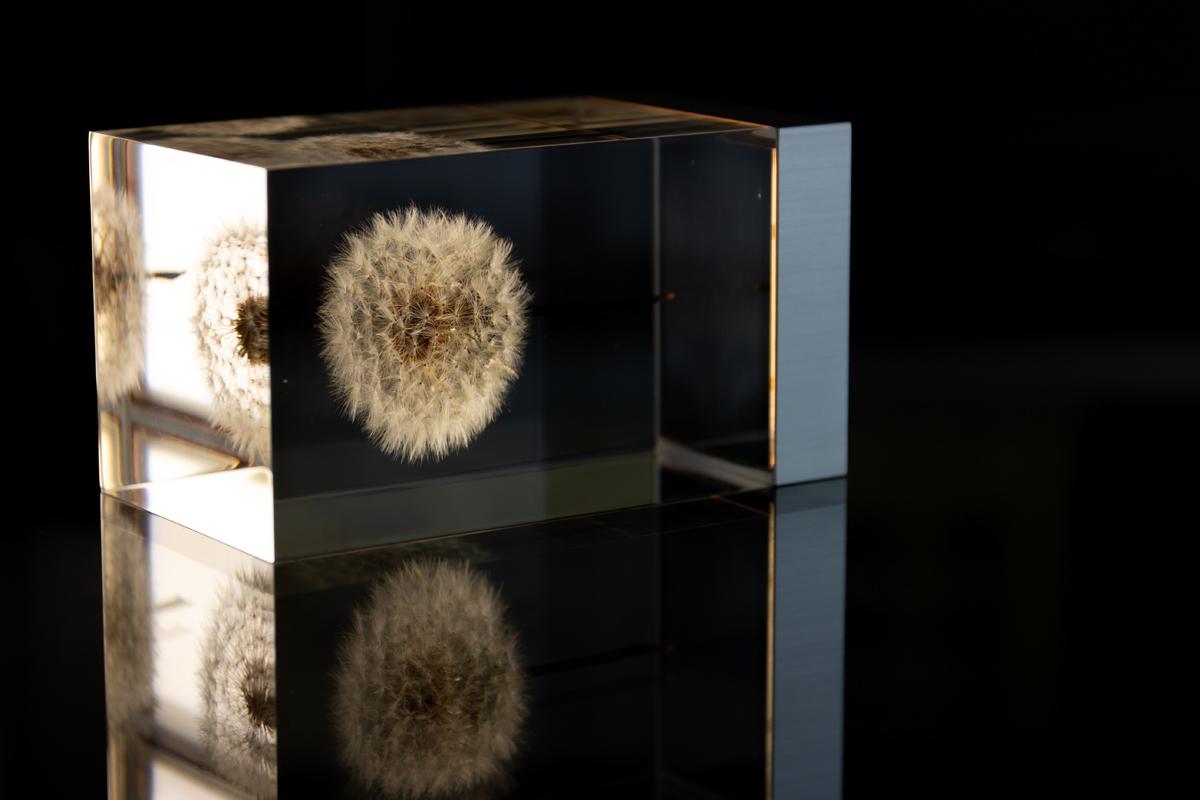 3.生花のたんぽぽを閉じ込めたゆらぎ照明・アクリルオブジェ | OLED TAMPOPO LIGHT by TAKAO INOUE