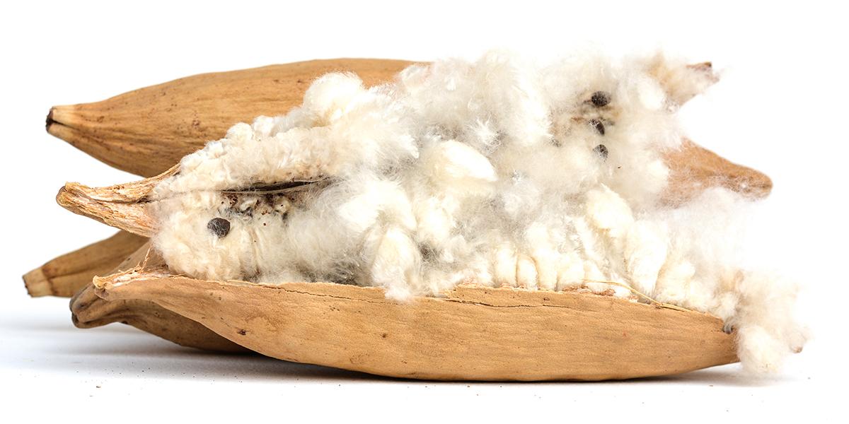 中材には、東南アジアに自生するカポックという木の実から採れる天然の綿「パンヤ」を使用坐禅蒲団(坐蒲)・瞑想用クッション| ZAF(ザフ)