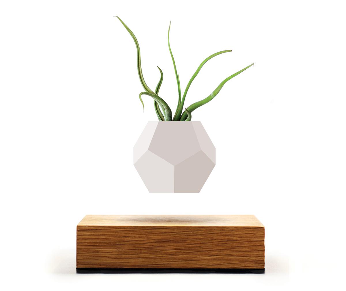 磁力で宙に浮き回転する植物プランター(カプトメドゥーサエ) | LYFE