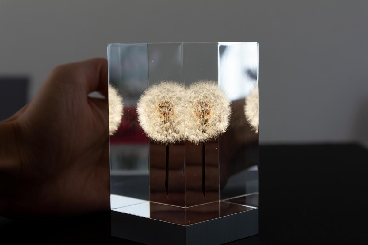 2.生花のたんぽぽを閉じ込めたゆらぎ照明・アクリルオブジェ | OLED TAMPOPO LIGHT by TAKAO INOUE