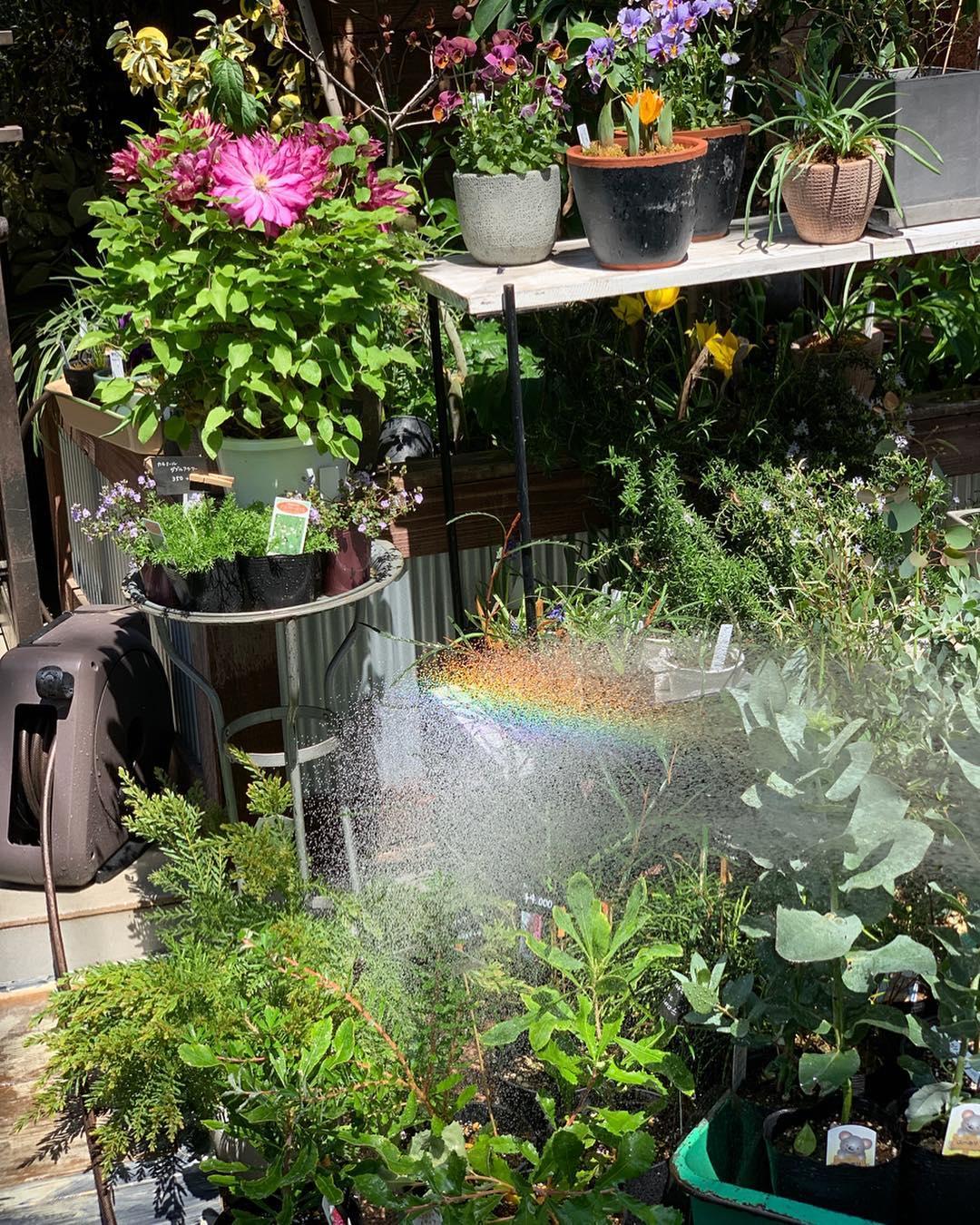 水流切り替えも簡単。4種のシャワーで、庭の水やりも、ベランダや車の掃除も自在な「ホースリール」|Royal Gardeners Club(ロイヤルガーデナーズクラブ)