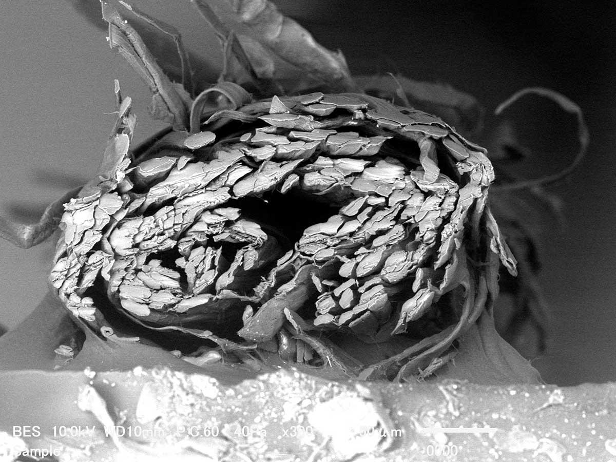 和紙は、多孔質構造。目に見えないほど、微細な穴が、無数にあいているので、吸水・放湿性が高い糸|消臭効果、サラサラ効果が続く、美濃和紙を使った和紙靴下・和紙ソックス
